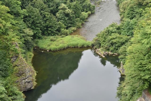 ヤマセミ 巣波里ダム2019081100002