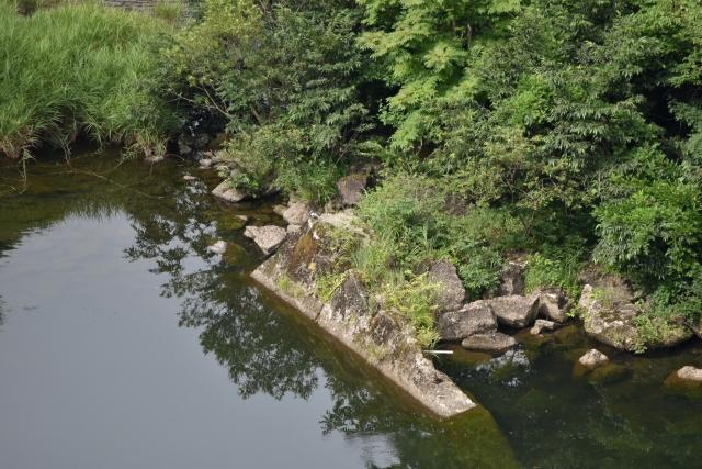 ヤマセミ 巣波里ダム2019081100003