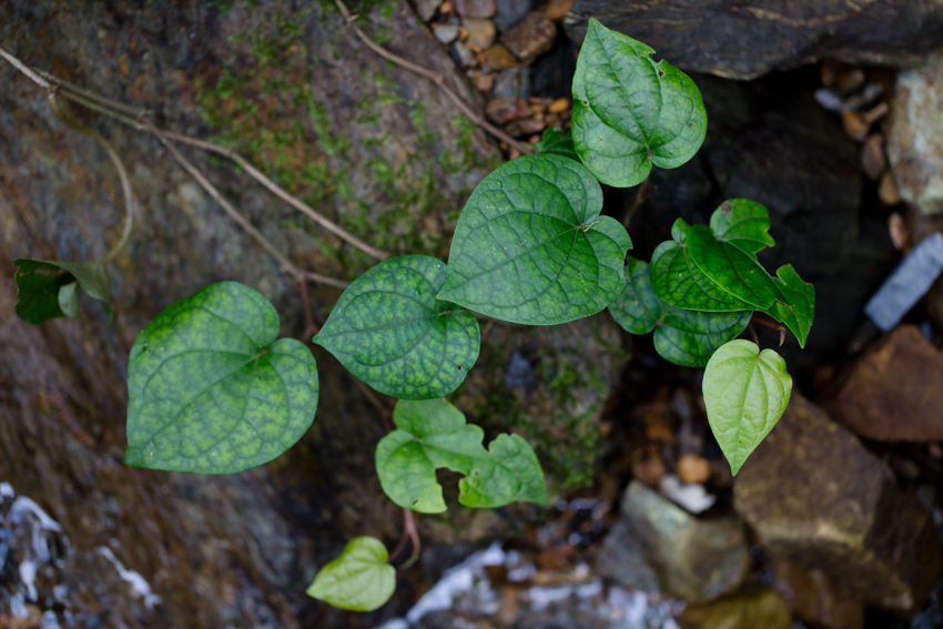 19014植物1