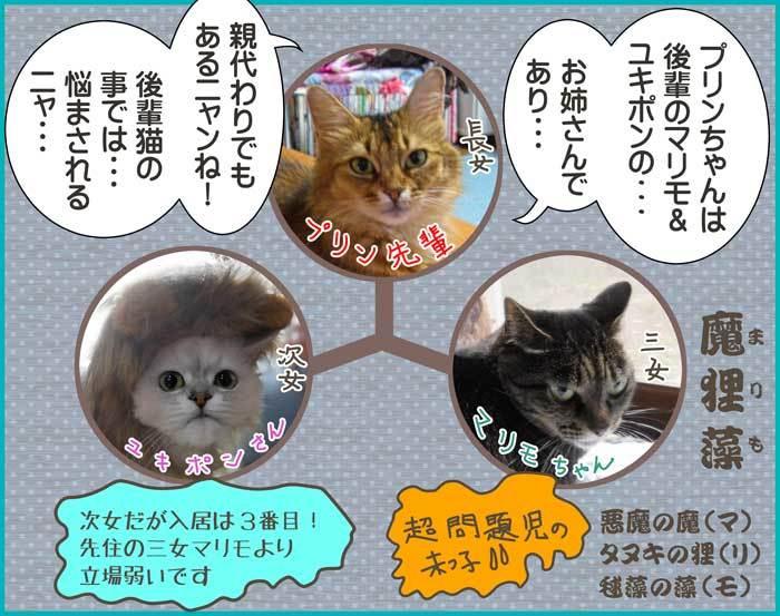 2019-06-18-Tue-01-後輩猫の事で悩む先輩_DSCN9651
