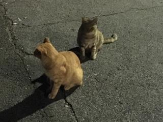 IMG_2894 地域猫