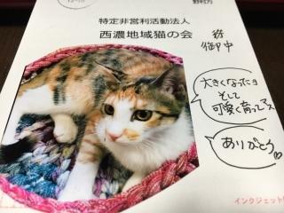 IMG_3372 ハガキ
