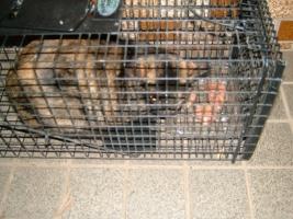 IMG_3619 サビ母猫