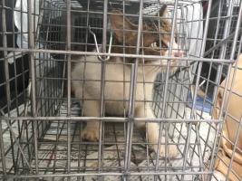 IMG_3660 母猫