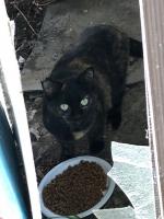 IMG_3925 地域猫