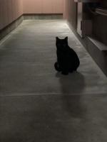 IMG_3923 地域猫