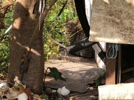 IMG_3920 地域猫