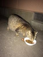 IMG_4102 妊婦猫
