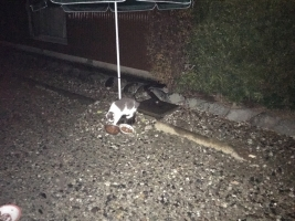 IMG_4189 地域猫給餌