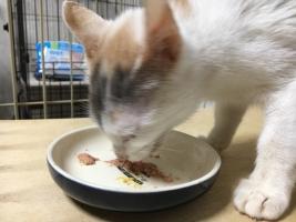 IMG_4273 子猫