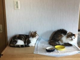 IMG_4275 兄猫と茶茶
