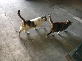 IMG_4700 地域猫