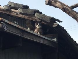 IMG_4731 メス猫