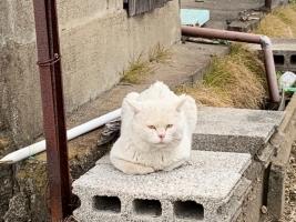 IMG_5179 シロふくよか猫