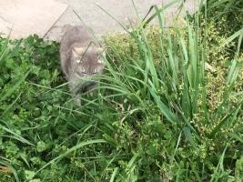IMG_6018 母猫