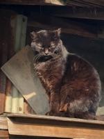 IMG_6175 地域猫あち