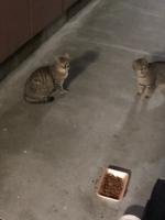 IMG_6173 地域猫たち