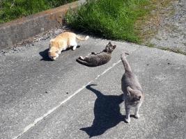 IMG_6519 地域猫たちのある日