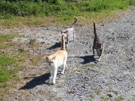 IMG_6518 地域猫たち