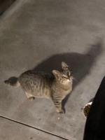 IMG_6542 地域猫息子