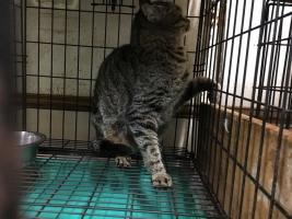 IMG_6755 地域猫令和1
