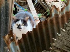 IMG_6993 おっかさん猫