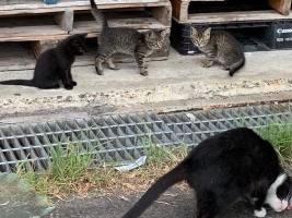 IMG_7191 子猫