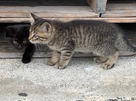 IMG_7193 子猫