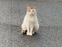 IMG_7237 さくら猫