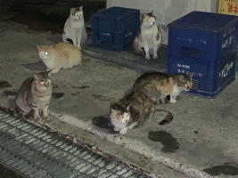 IMG_7224 地域猫コロニー