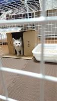 IMG_7370 子猫
