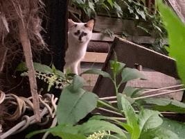 IMG_7376 地域猫のしろ