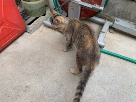 IMG_7552 331 子猫