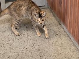 IMG_7549 331子猫