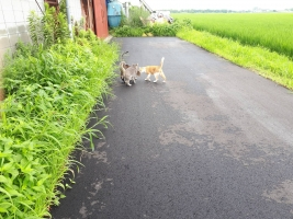 IMG_7753 倉庫猫