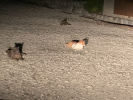 IMG_7870 地域猫