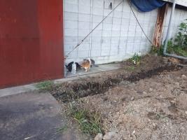 IMG_8362 地域猫