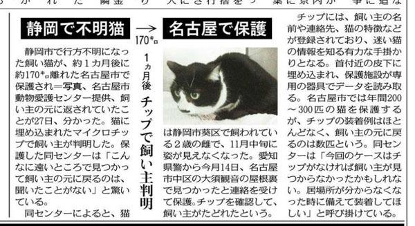 猫ちゃん東京新聞