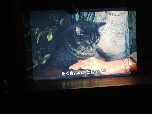 ドミーと猫DSCN8462