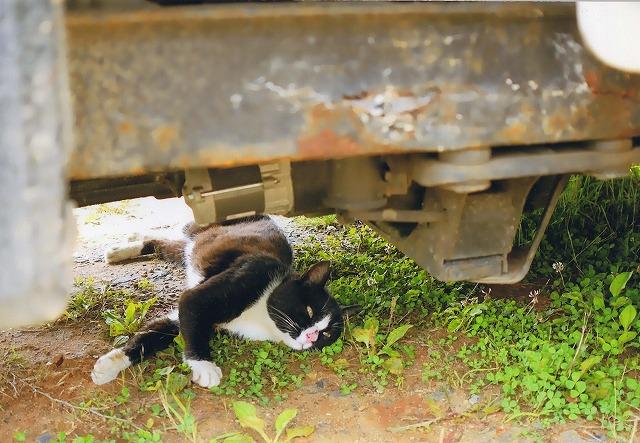 小松みどり 田代島の猫1