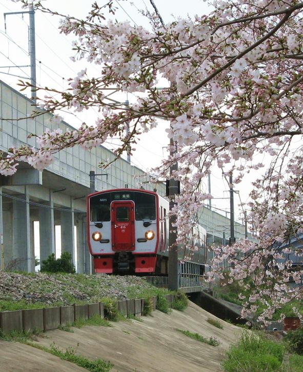 桜815系