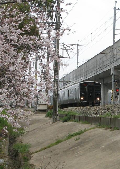 桜817系