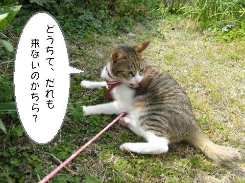 猫漫画0323