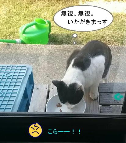 白黒猫とチコちゃん