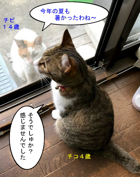 猫漫画0823