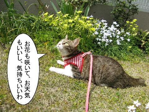 猫漫画3/19