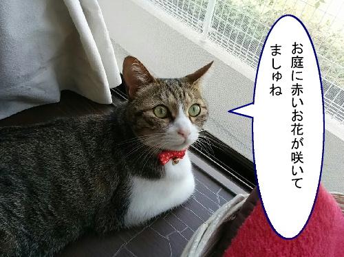 ajisai-chiko1.jpg