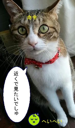 ajisai-chiko2.jpg