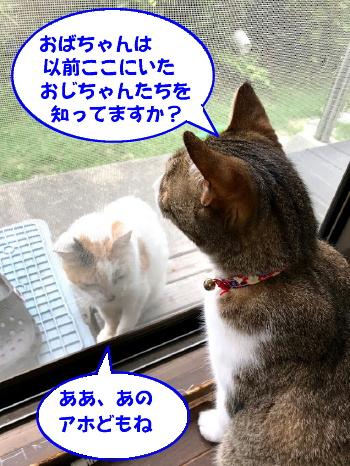chiko-chibi1.jpg