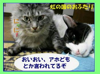 chiko-chibi4.jpg